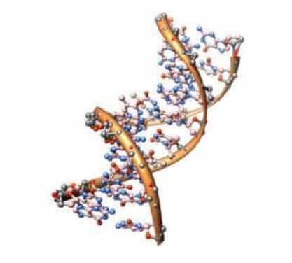 Lezing 27-02-2020 Genetische genealogie